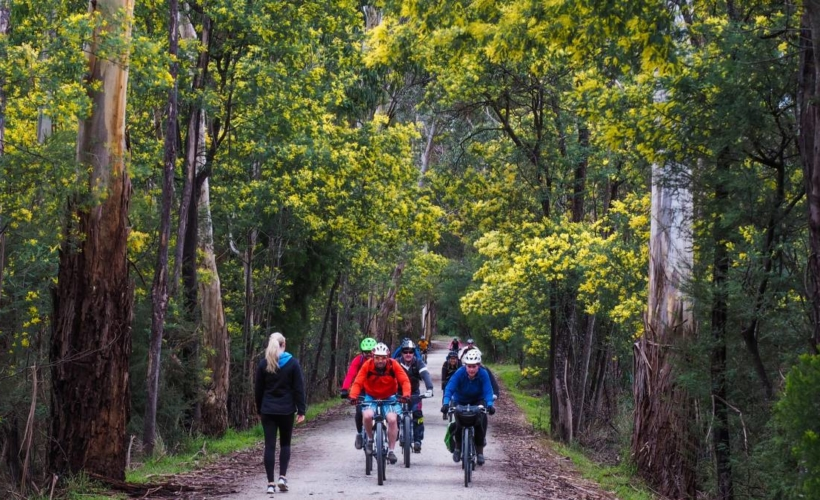 Lillydale to Warburton rail trail